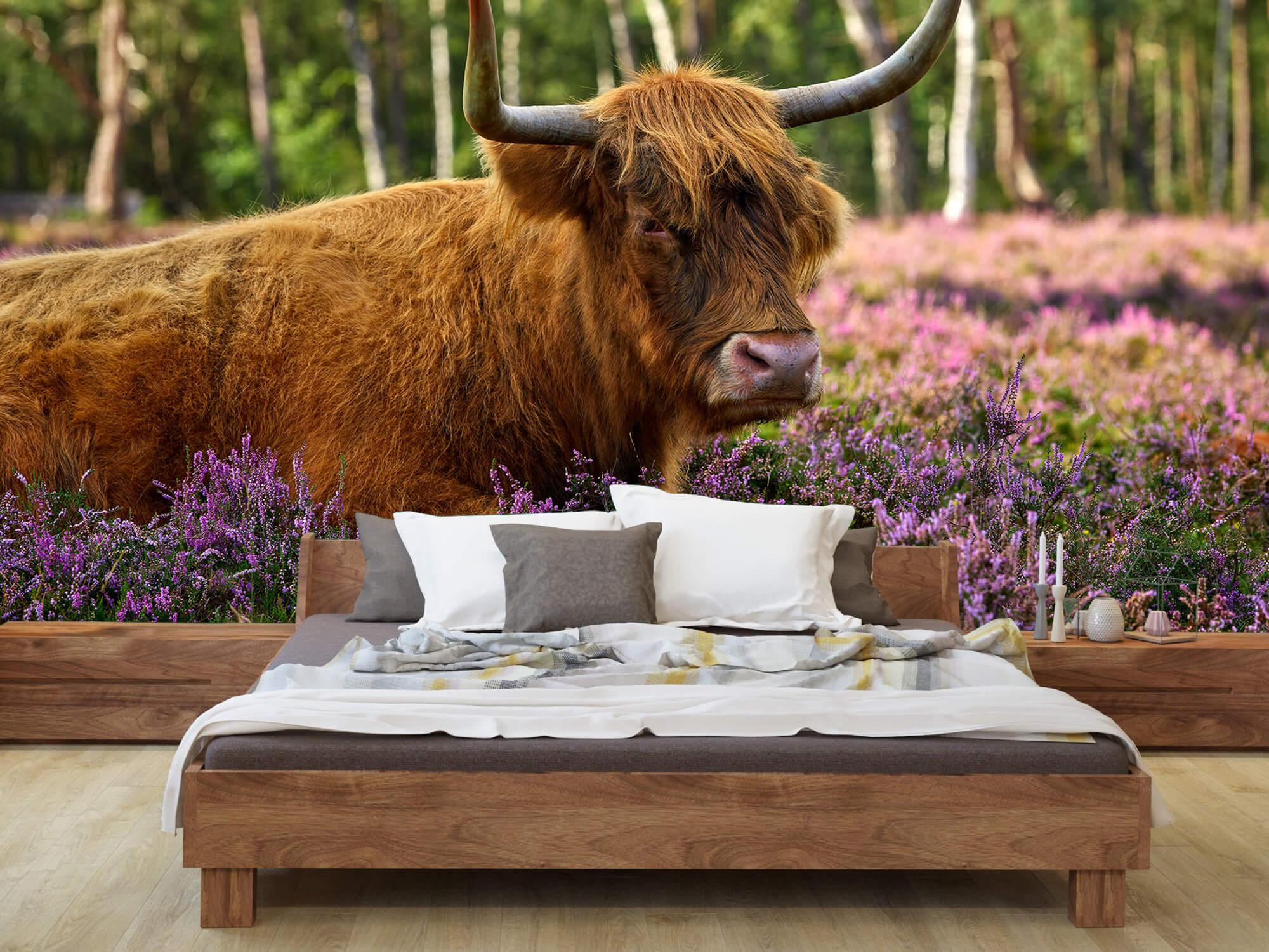 Hooglanders - Stoere Schotse hooglander 7