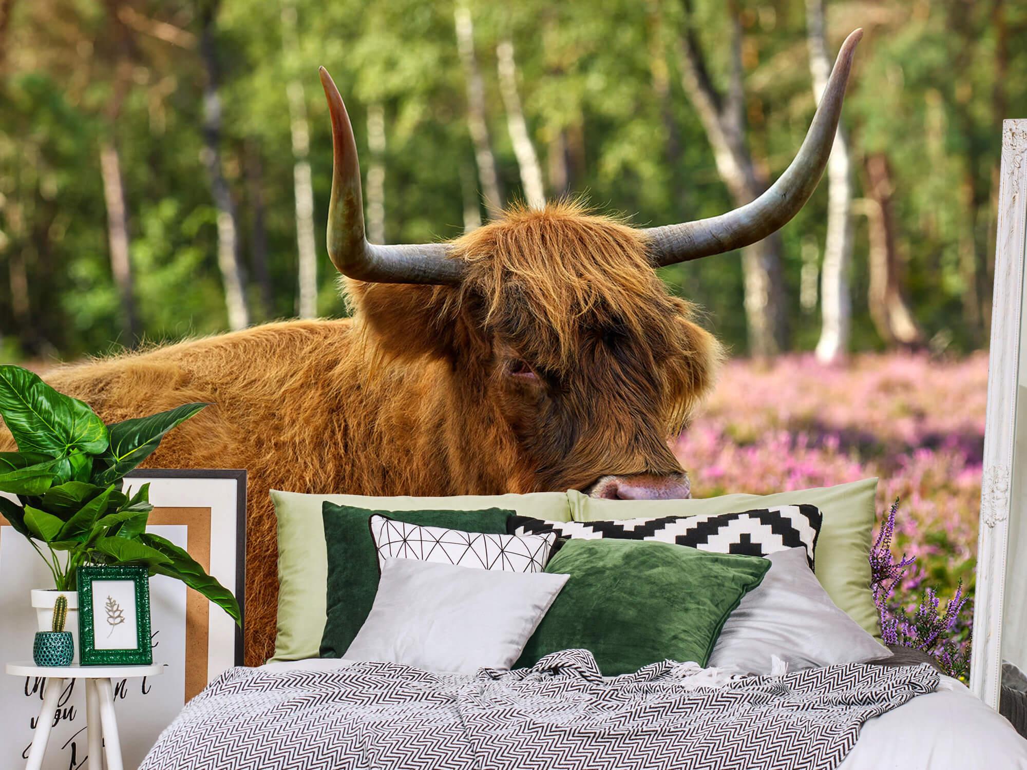 Hooglanders - Stoere Schotse hooglander 12