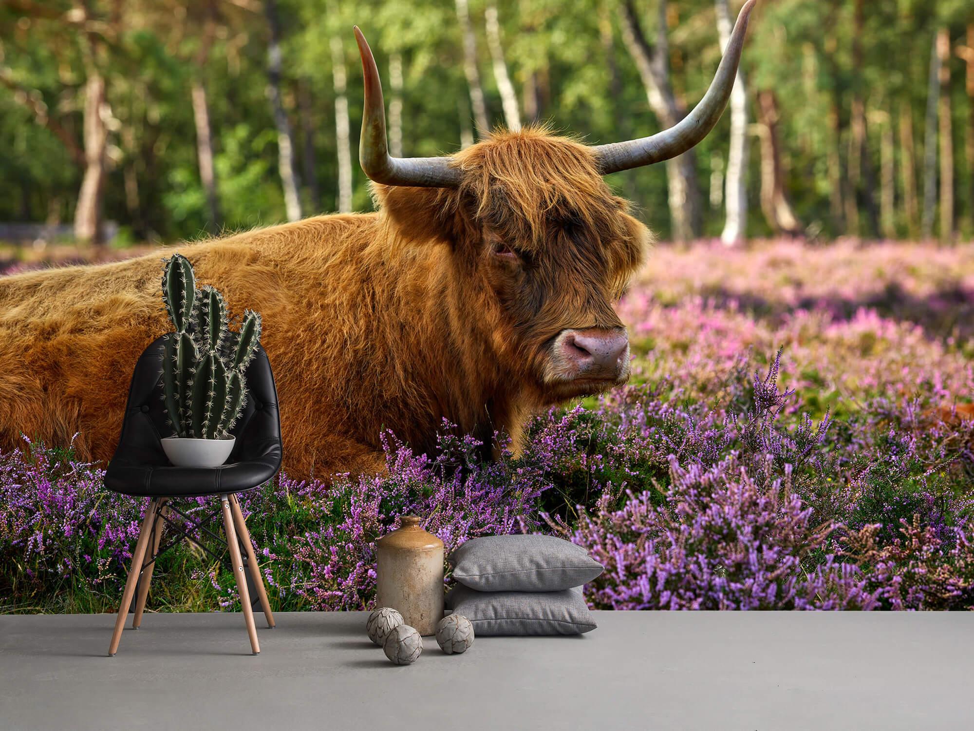 Hooglanders - Stoere Schotse hooglander 13