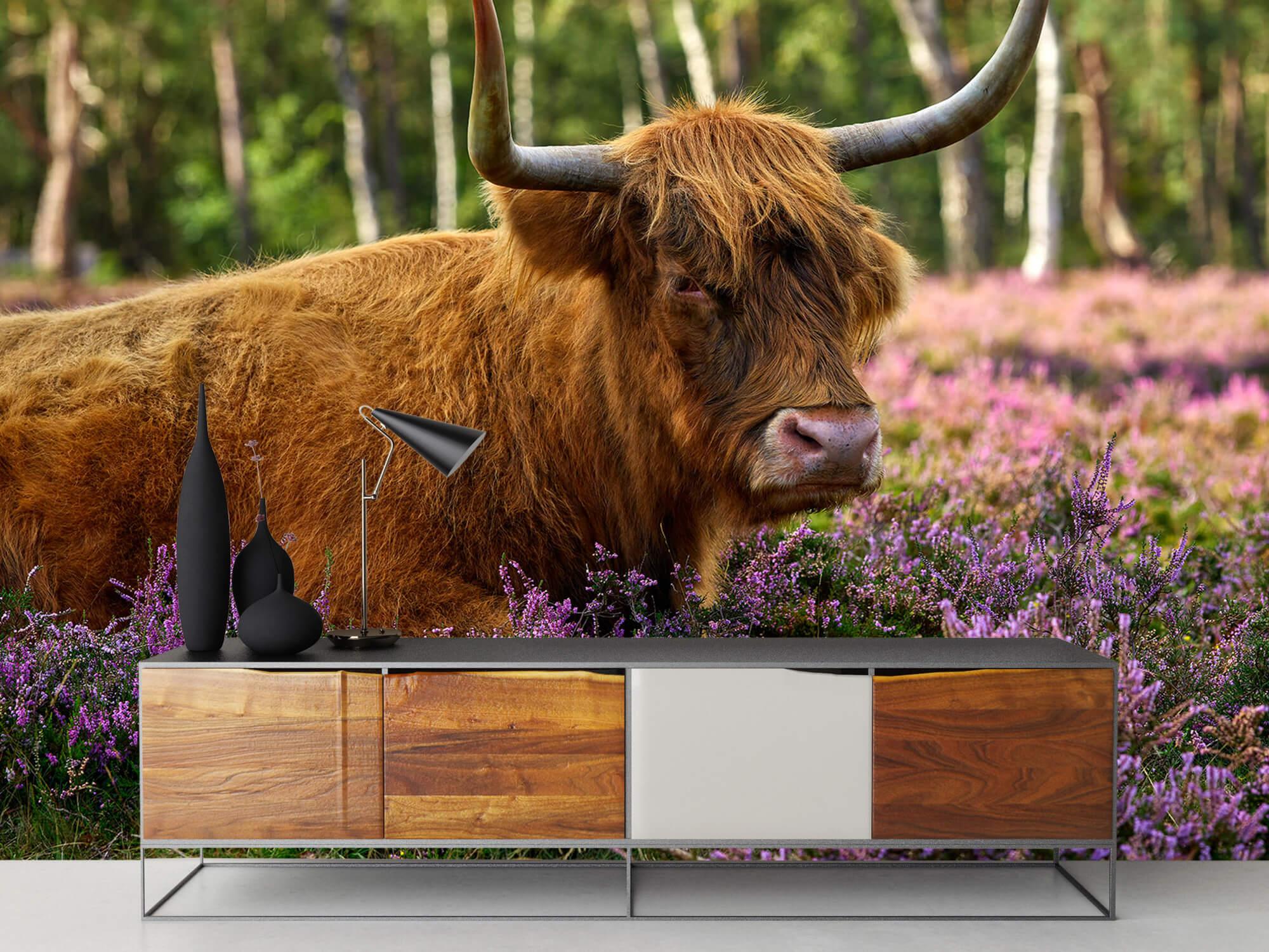 Hooglanders - Stoere Schotse hooglander 16
