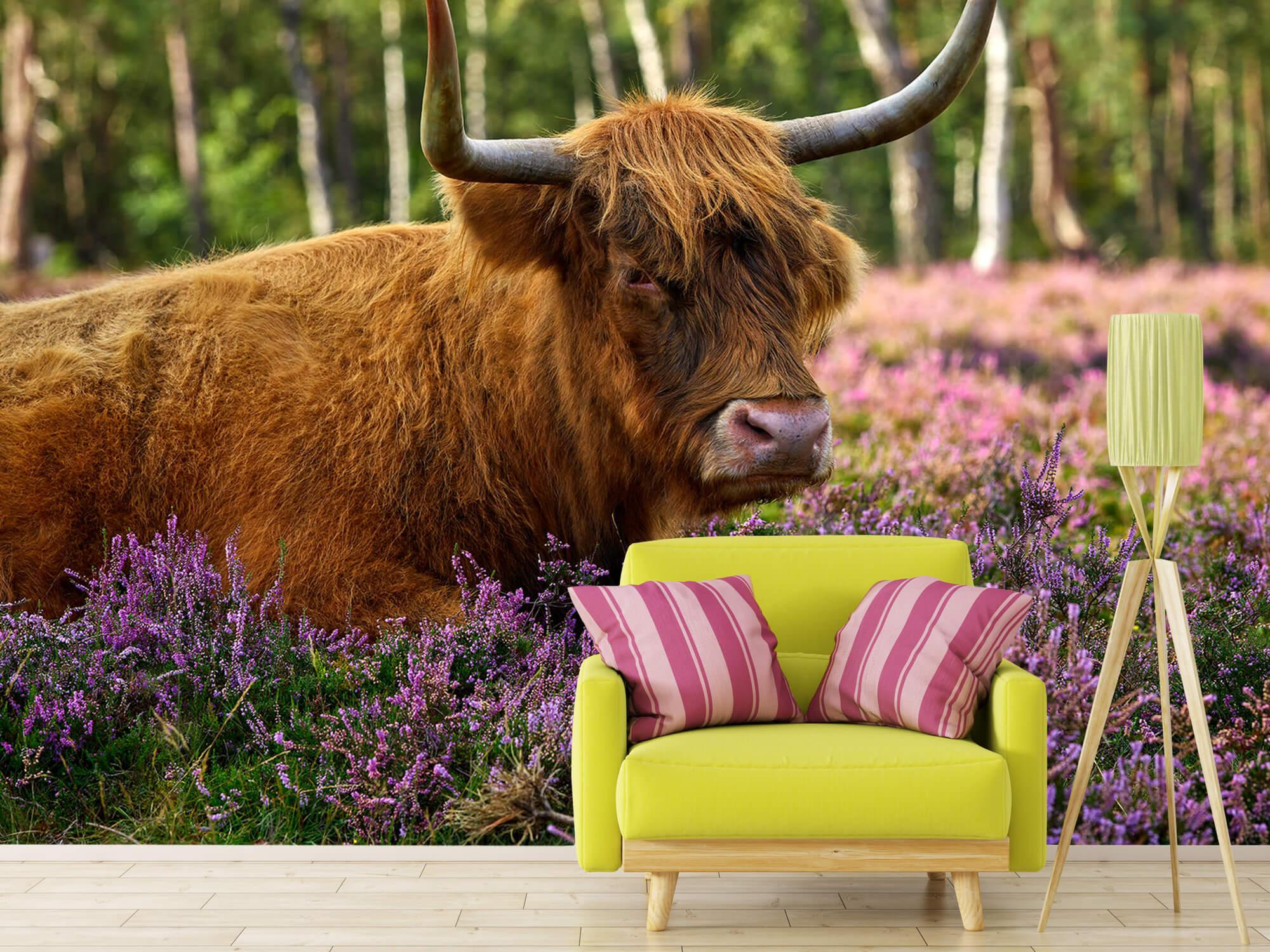 Hooglanders - Stoere Schotse hooglander 17