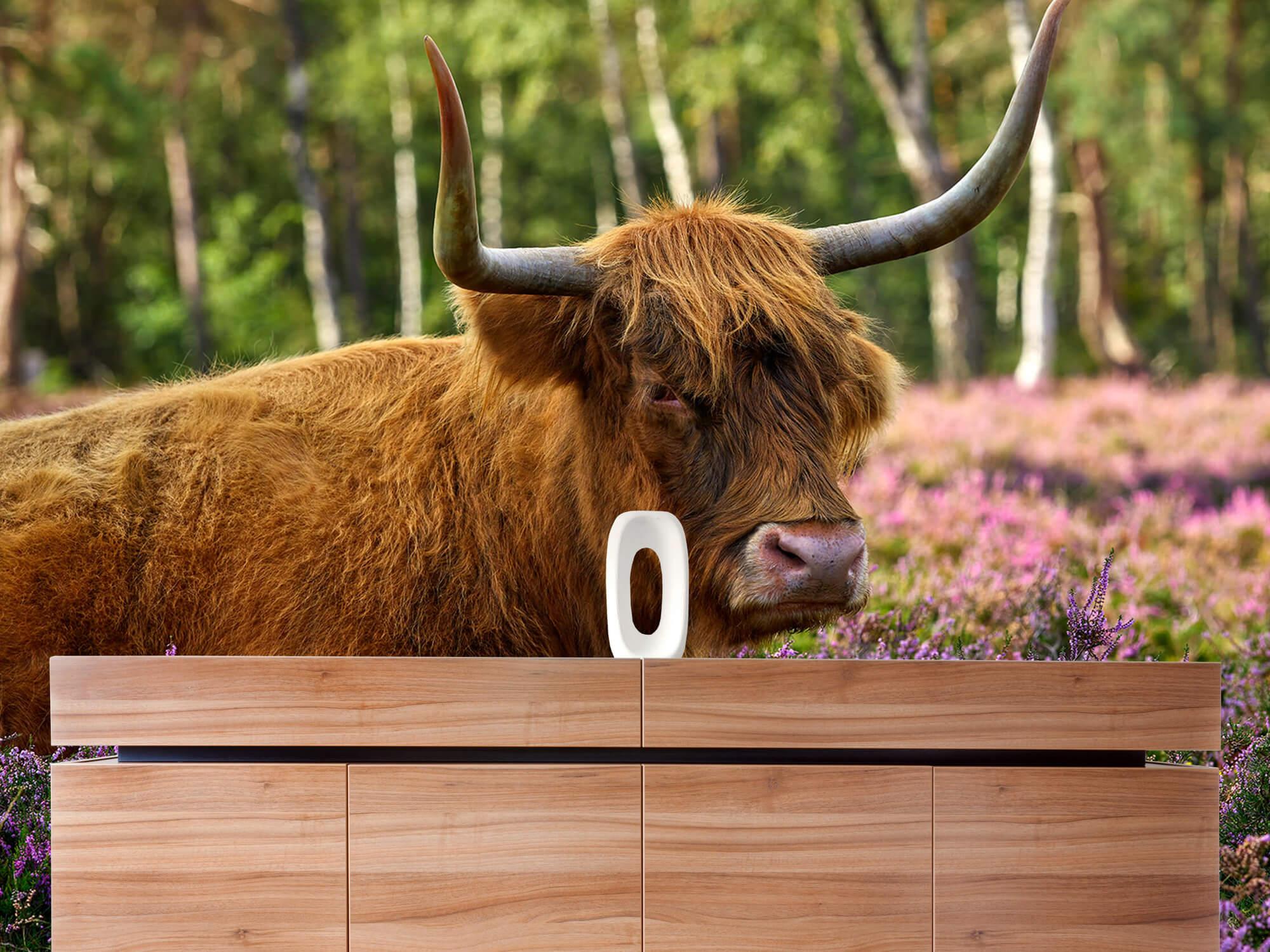 Hooglanders - Stoere Schotse hooglander 20