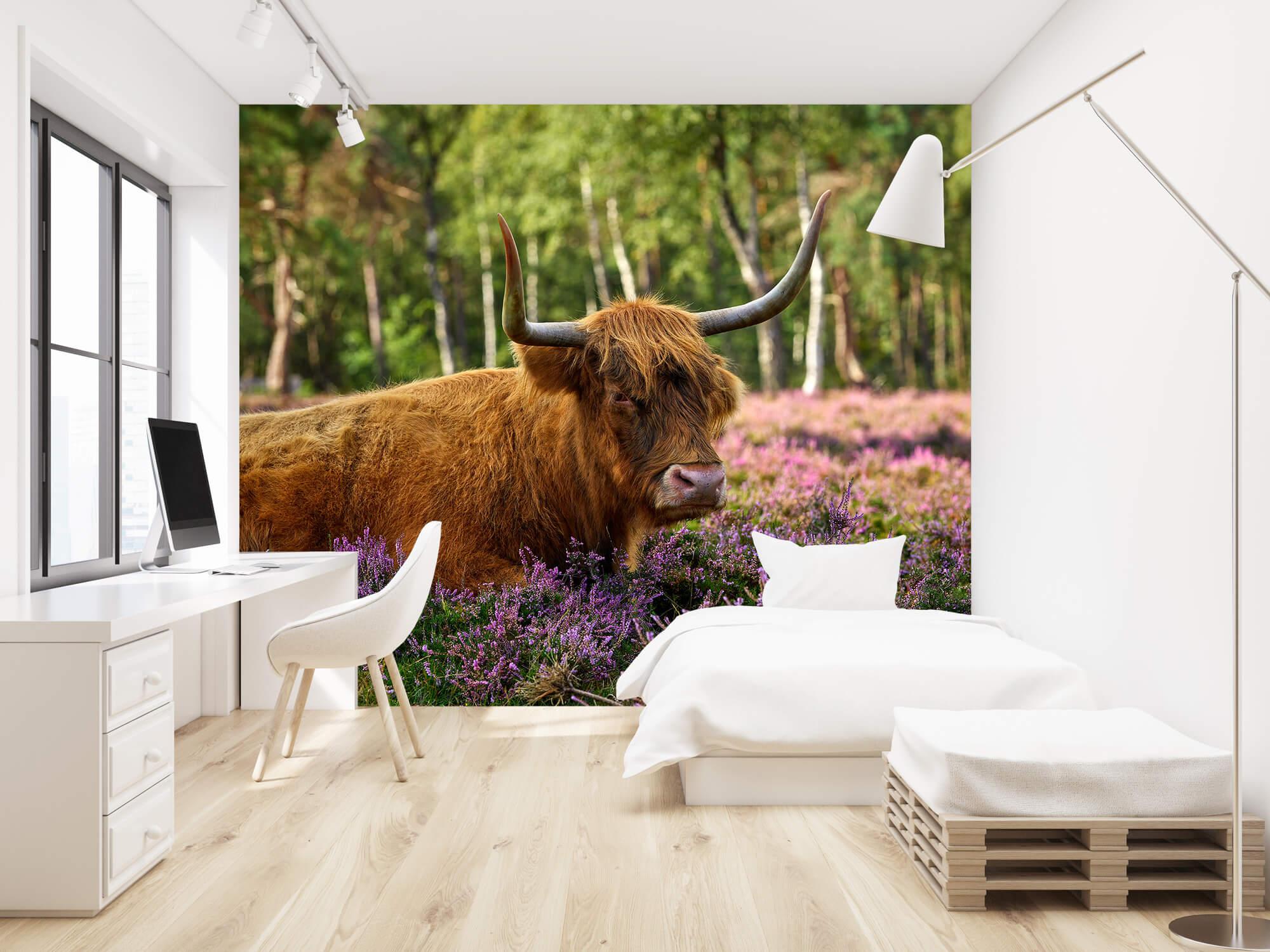 Hooglanders - Stoere Schotse hooglander 22