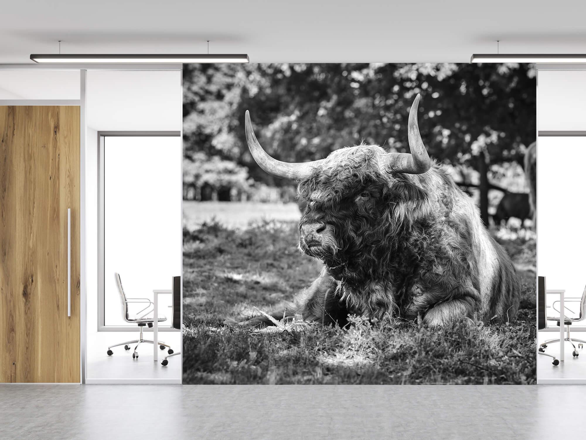 Hooglanders - Schotse hooglander stier 11