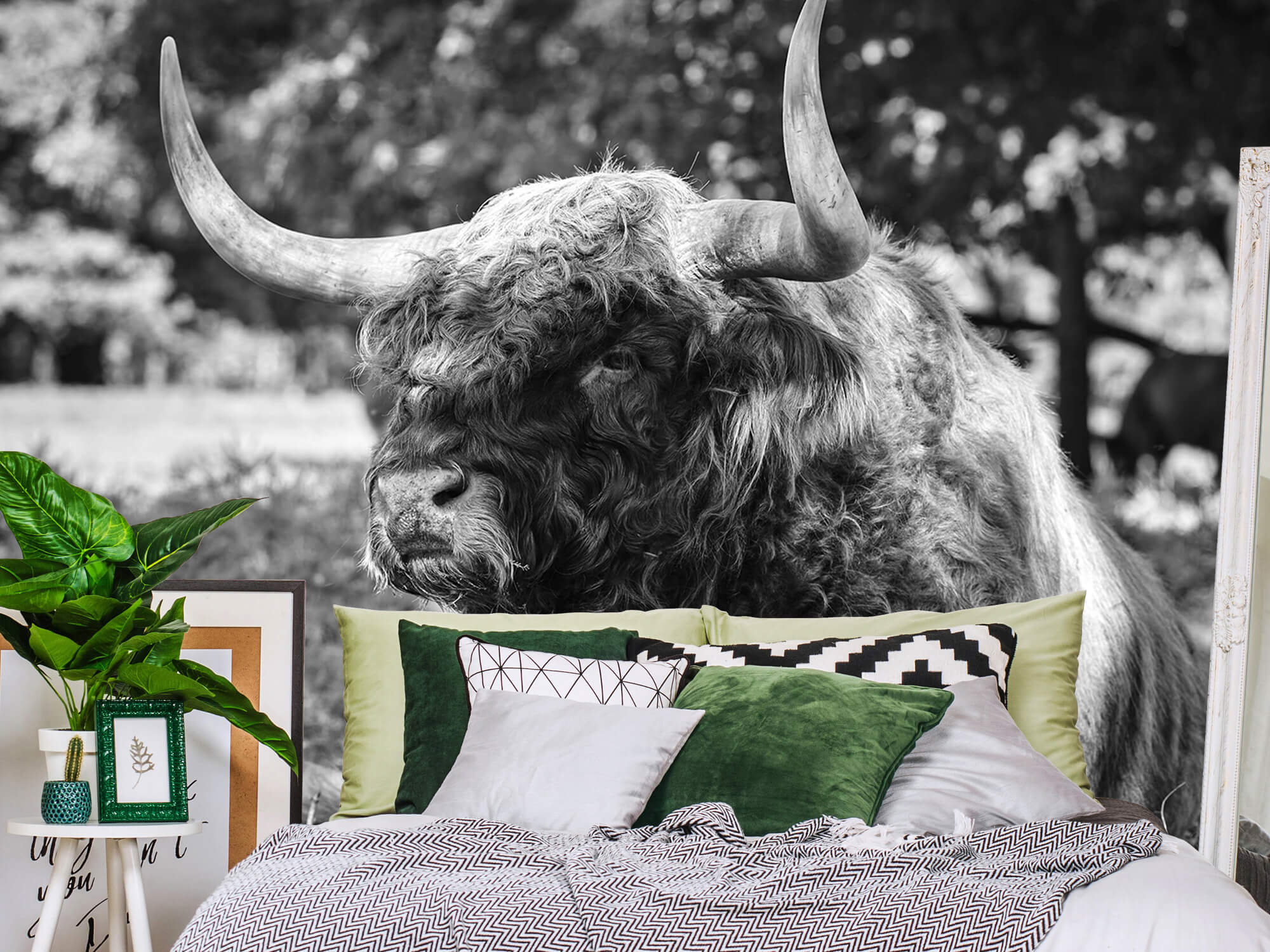 Hooglanders - Schotse hooglander stier 12