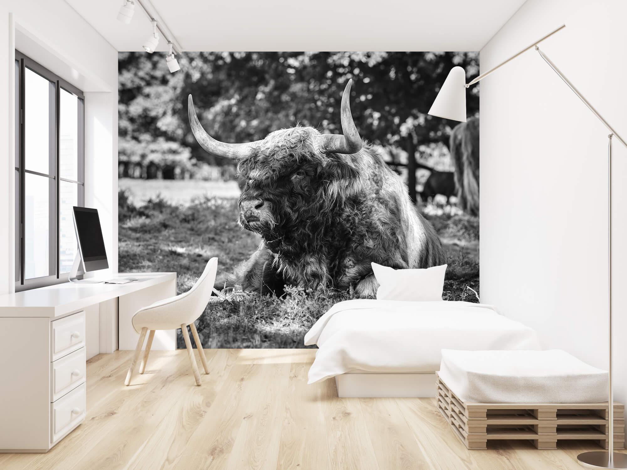 Hooglanders - Schotse hooglander stier 22