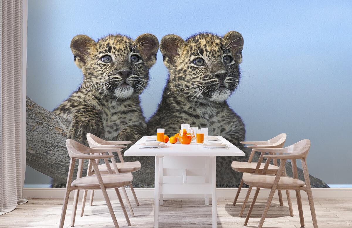 luipaarden Kleine luipaarden 2