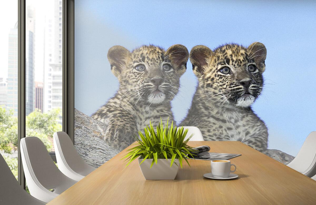luipaarden Kleine luipaarden 3