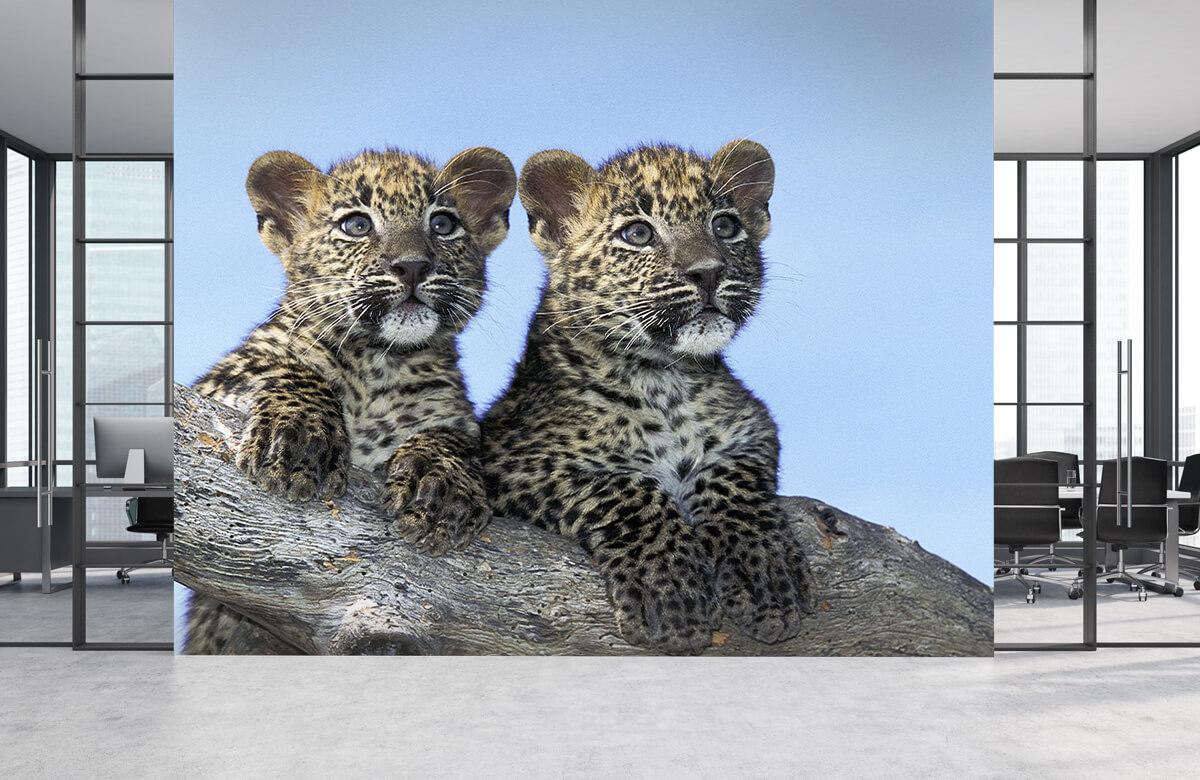 luipaarden Kleine luipaarden 4