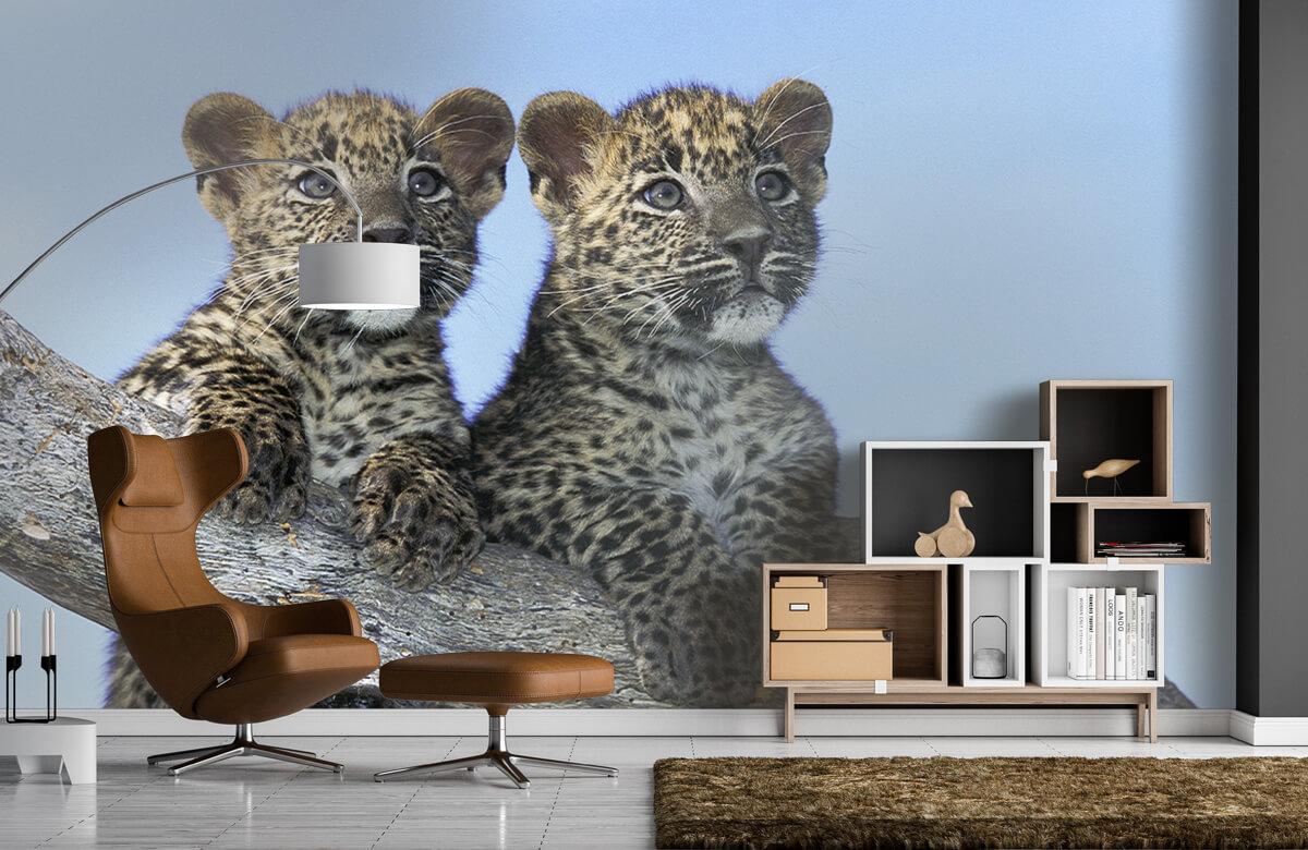 luipaarden Kleine luipaarden 5