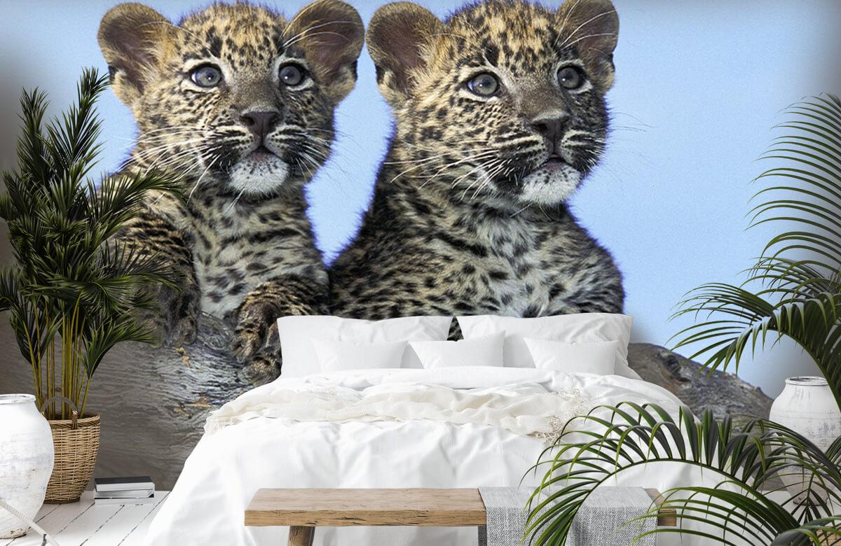 luipaarden Kleine luipaarden 1