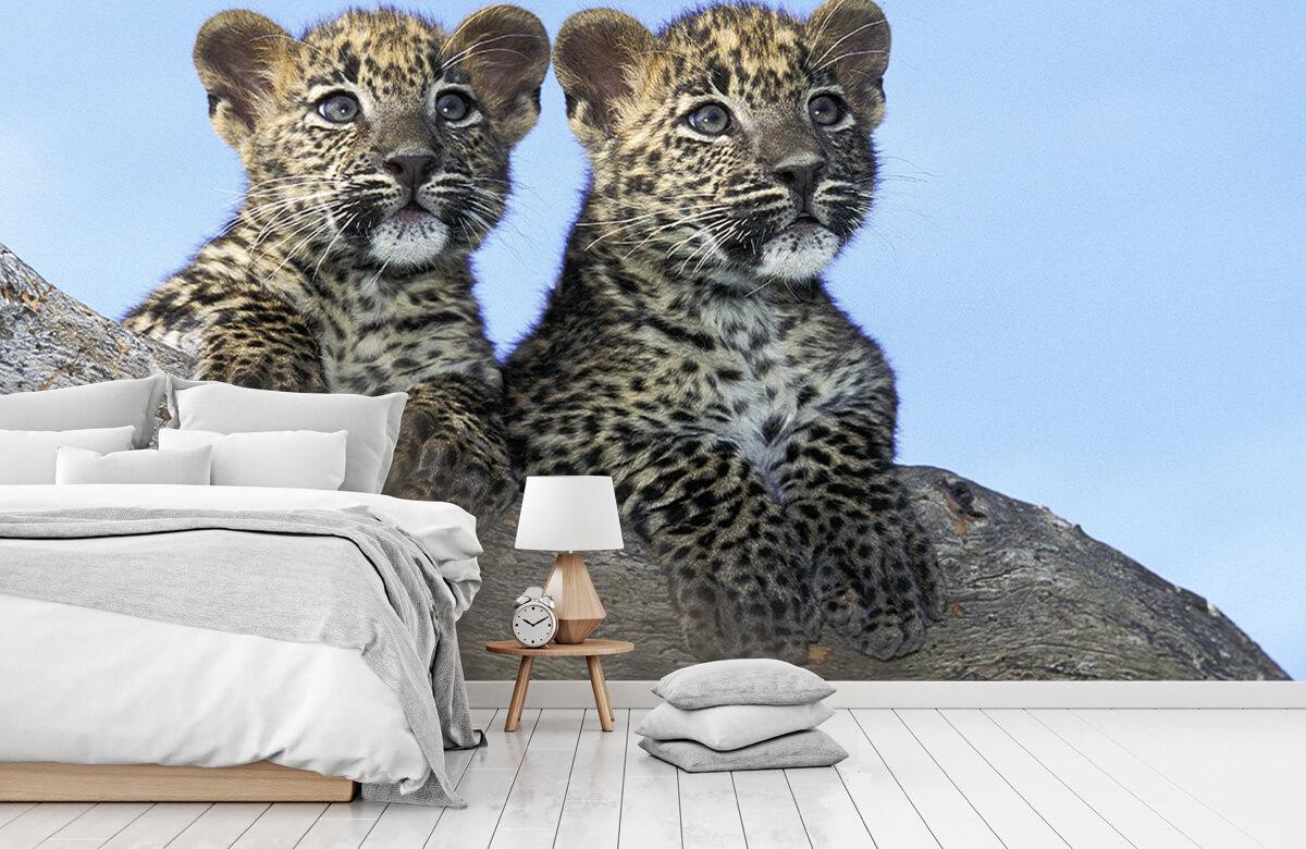 luipaarden Kleine luipaarden 7