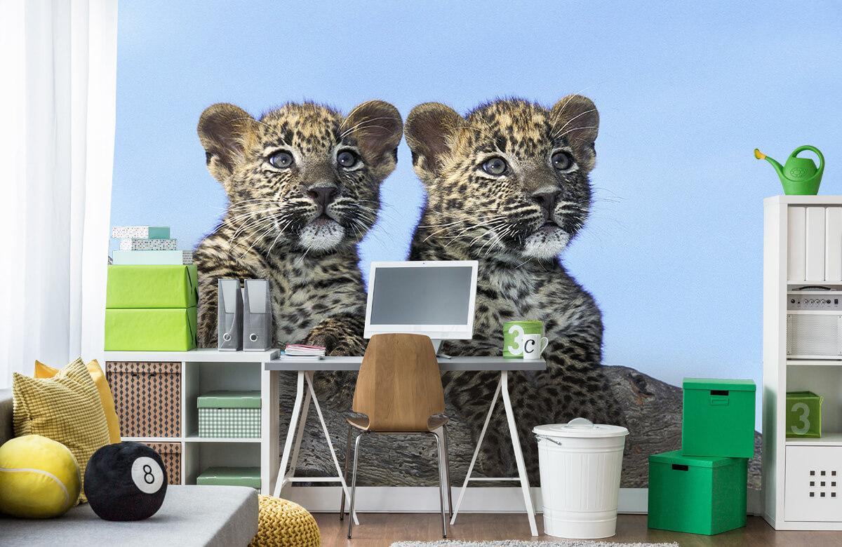 luipaarden Kleine luipaarden 9