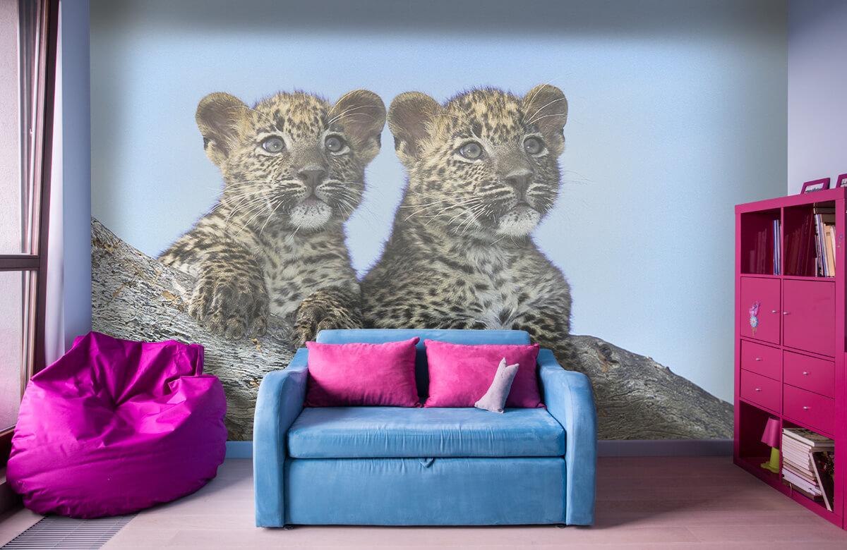 luipaarden Kleine luipaarden 10