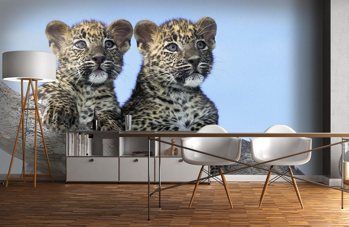 luipaarden Kleine luipaarden 11