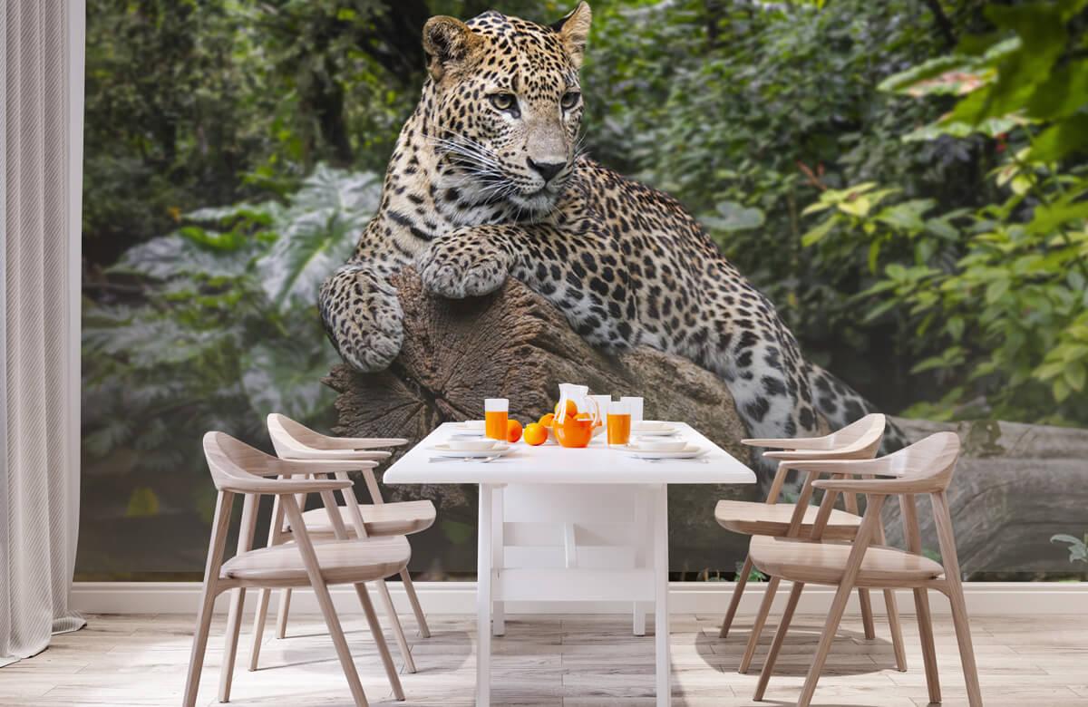 luipaarden Luipaard op boom 1