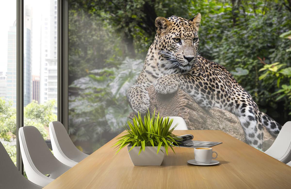 luipaarden Luipaard op boom 2