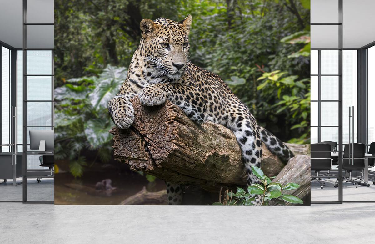luipaarden Luipaard op boom 3
