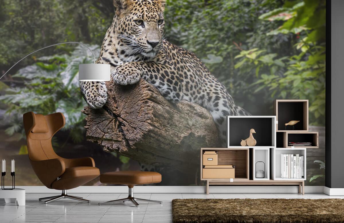 luipaarden Luipaard op boom 4