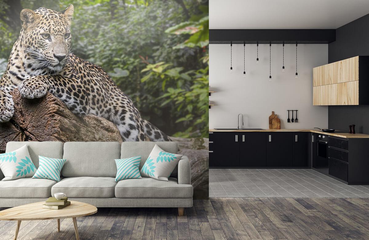 luipaarden Luipaard op boom 5