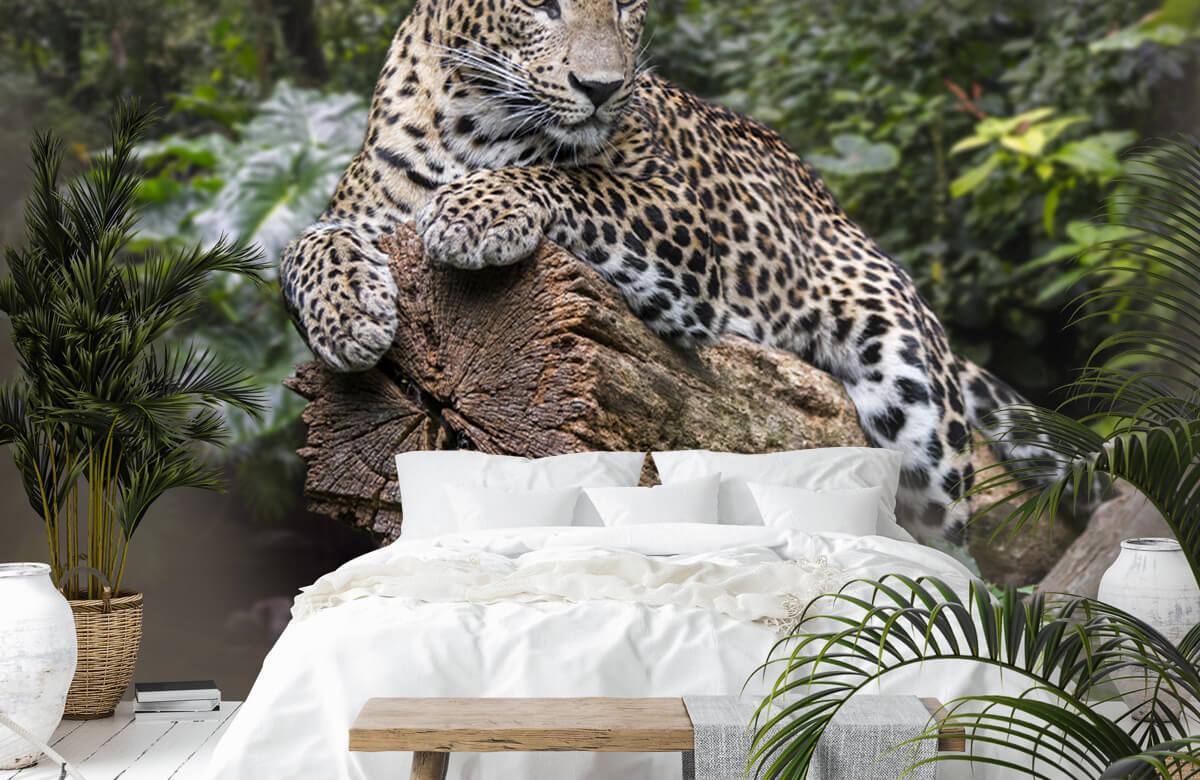 luipaarden Luipaard op boom 6