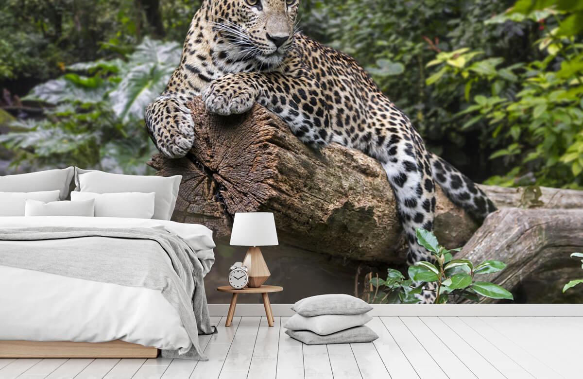 luipaarden Luipaard op boom 7