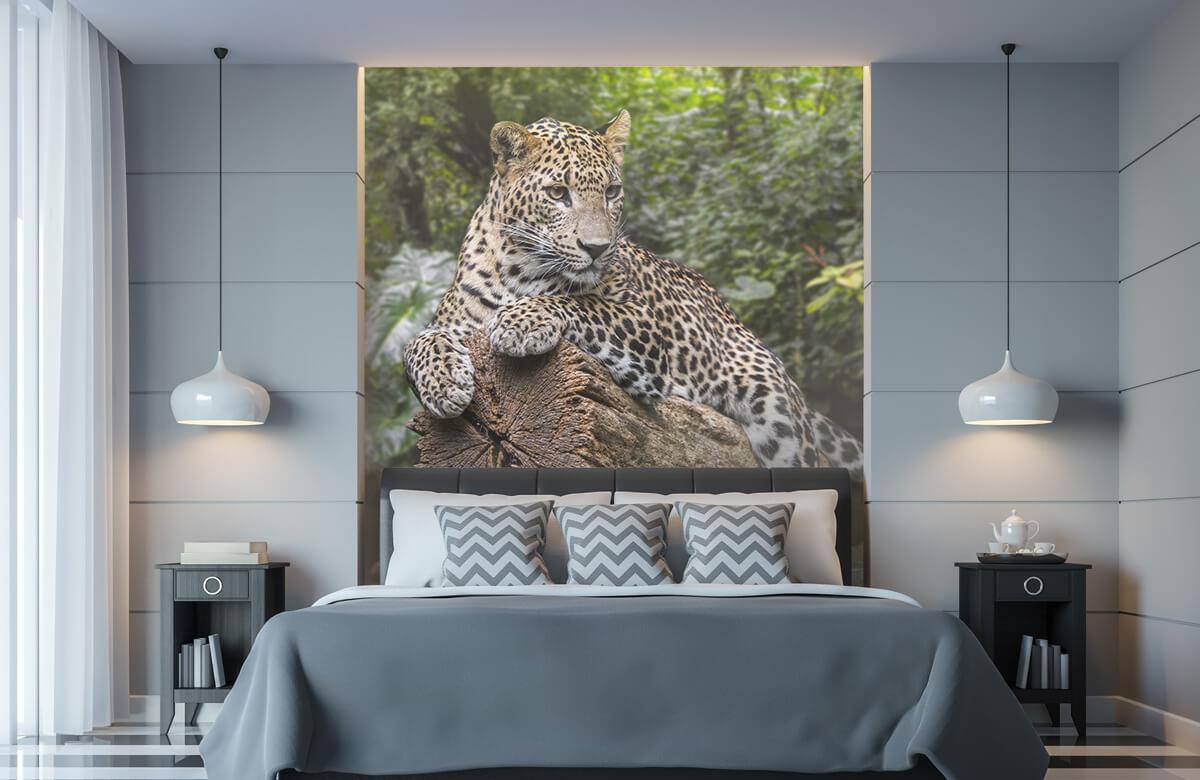 luipaarden Luipaard op boom 8