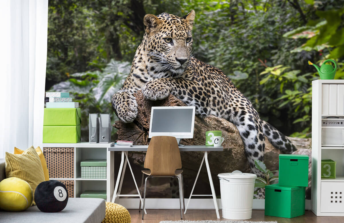 luipaarden Luipaard op boom 9