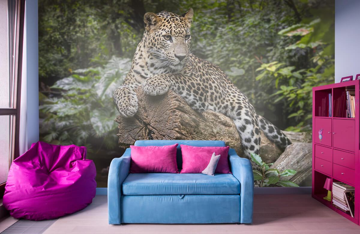 luipaarden Luipaard op boom 10