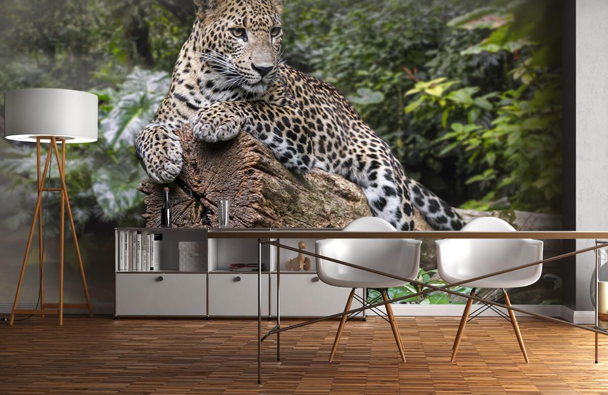 luipaarden Luipaard op boom 11