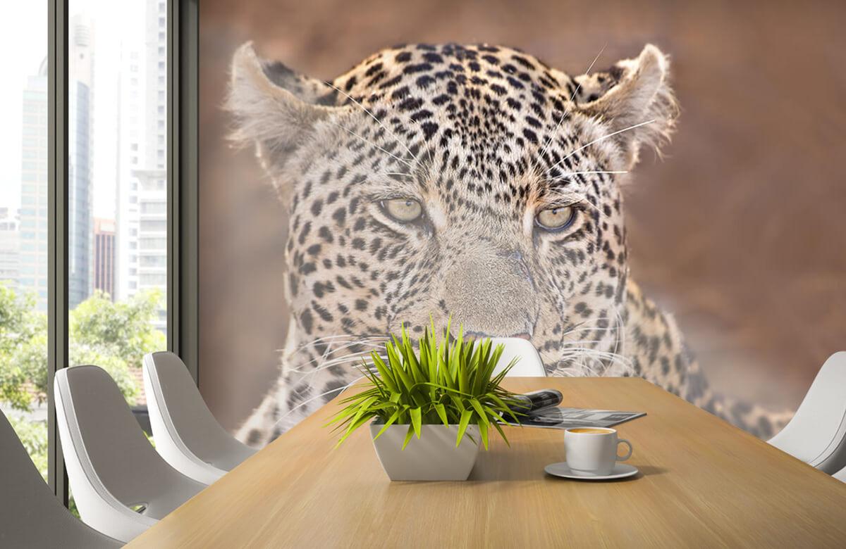 luipaarden Luipaard portret 3