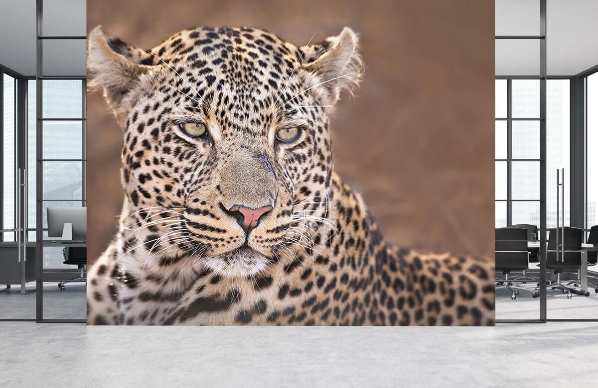 luipaarden Luipaard portret 2