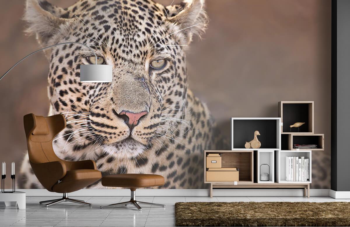 luipaarden Luipaard portret 7