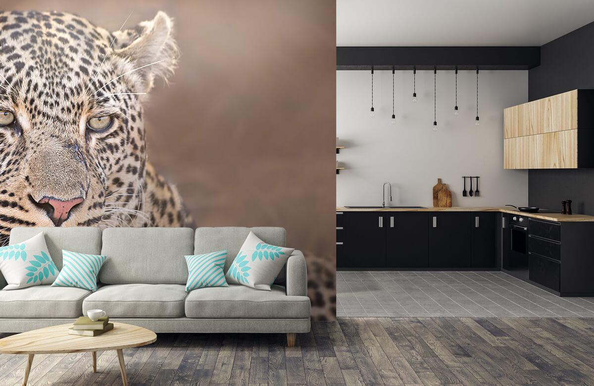 luipaarden Luipaard portret 5