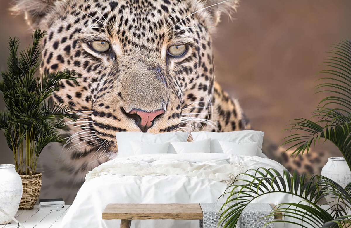 luipaarden Luipaard portret 8