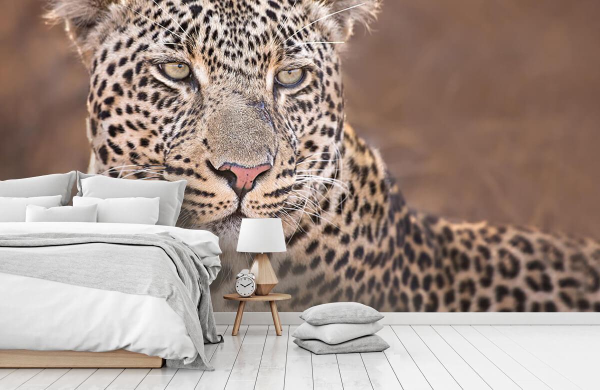luipaarden Luipaard portret 6