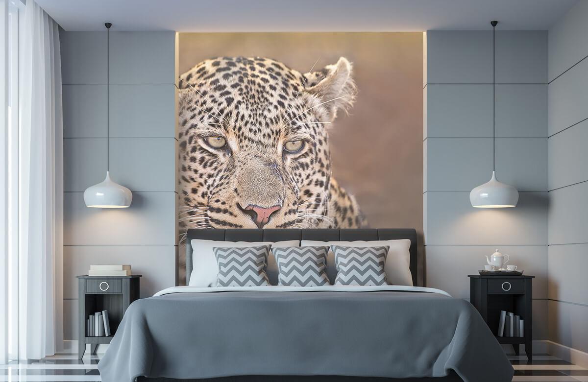 luipaarden Luipaard portret 9