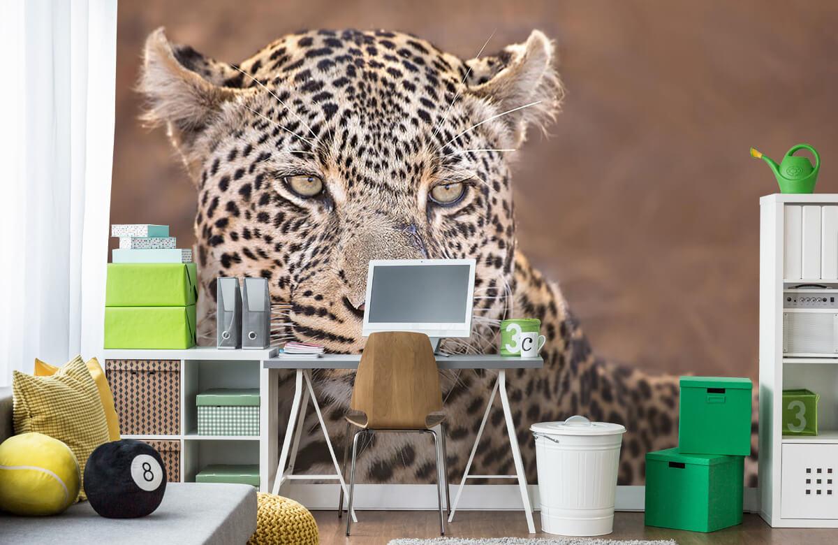 luipaarden Luipaard portret 10