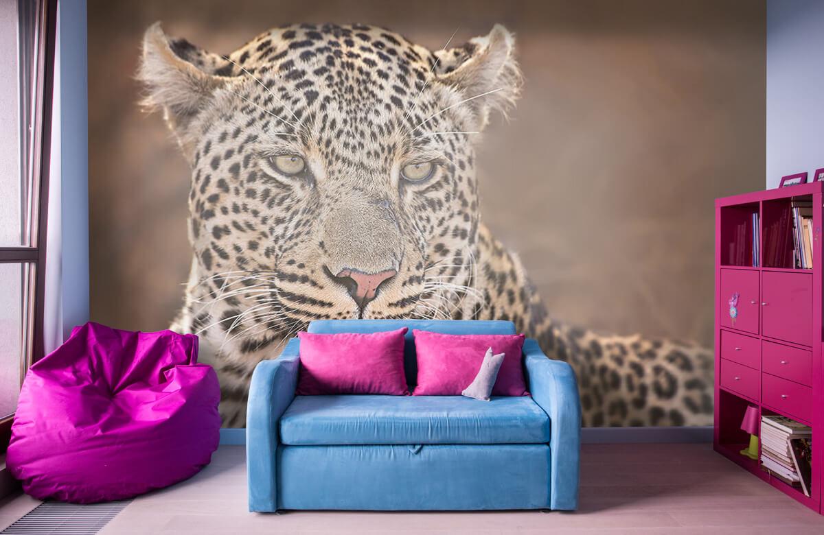 luipaarden Luipaard portret 11