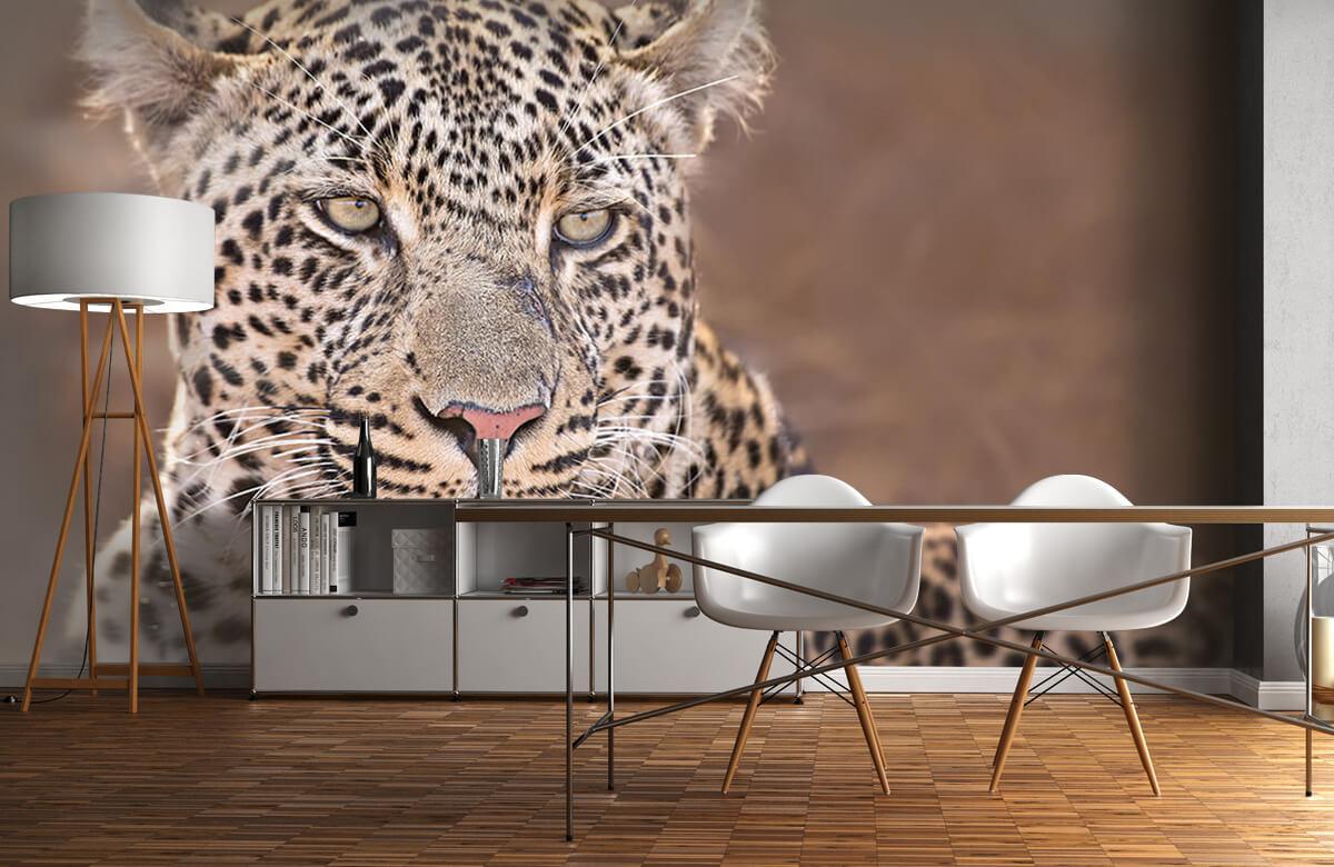 luipaarden Luipaard portret 4