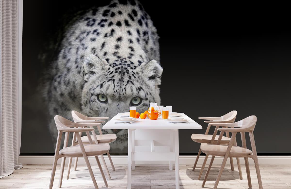 luipaarden Sneeuwluipaard 1