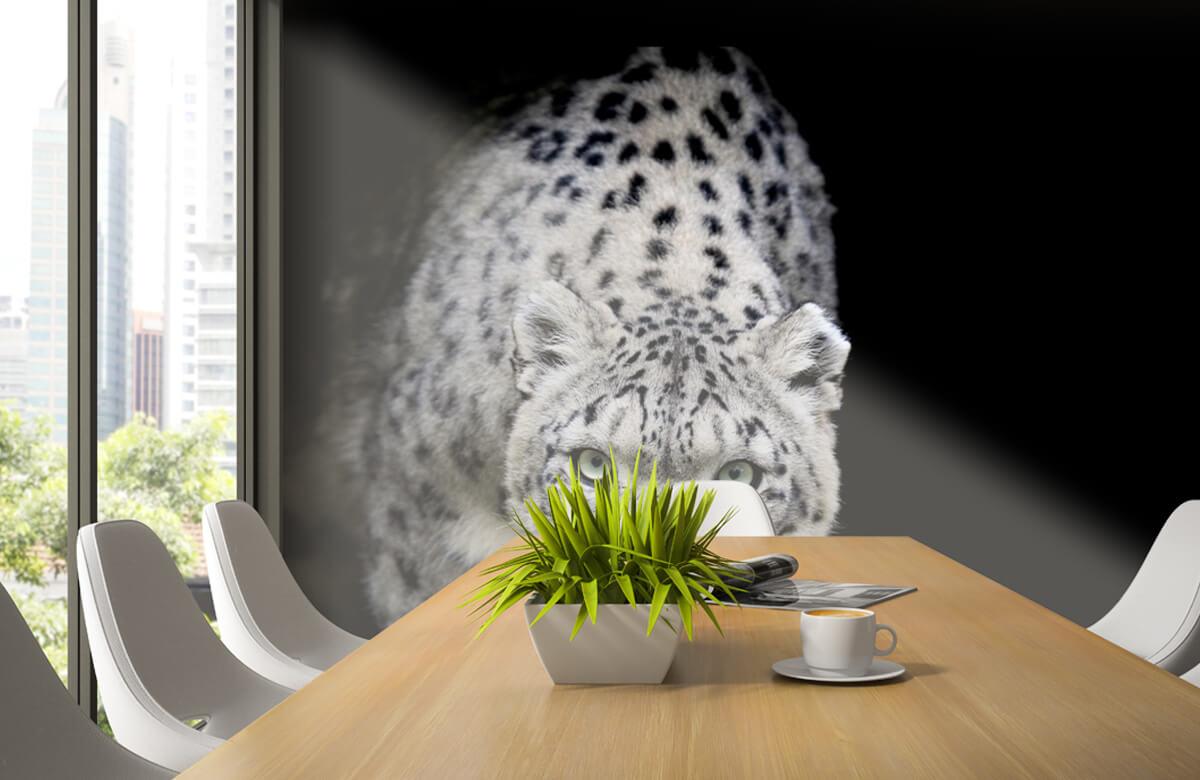 luipaarden Sneeuwluipaard 2