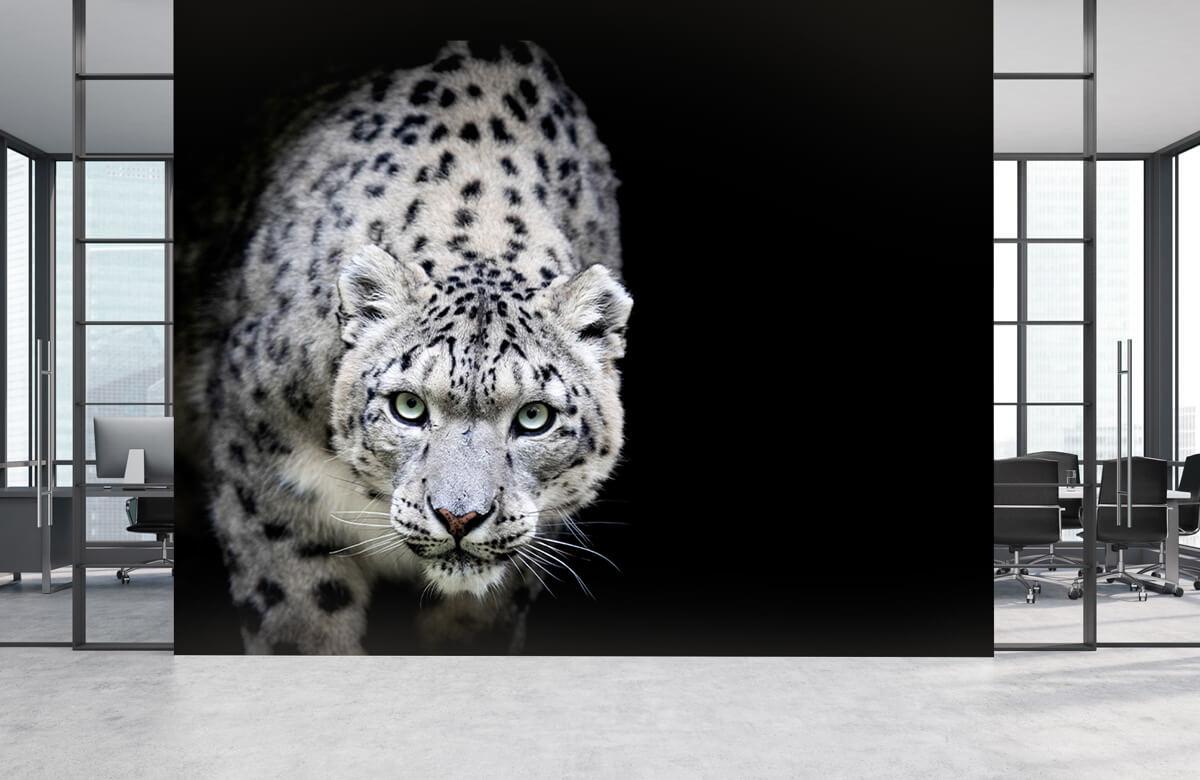 luipaarden Sneeuwluipaard 3