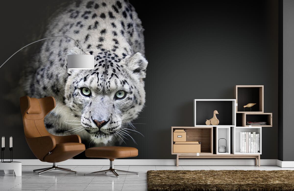 luipaarden Sneeuwluipaard 4