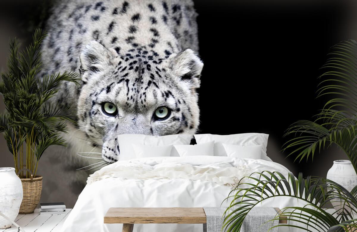 luipaarden Sneeuwluipaard 6