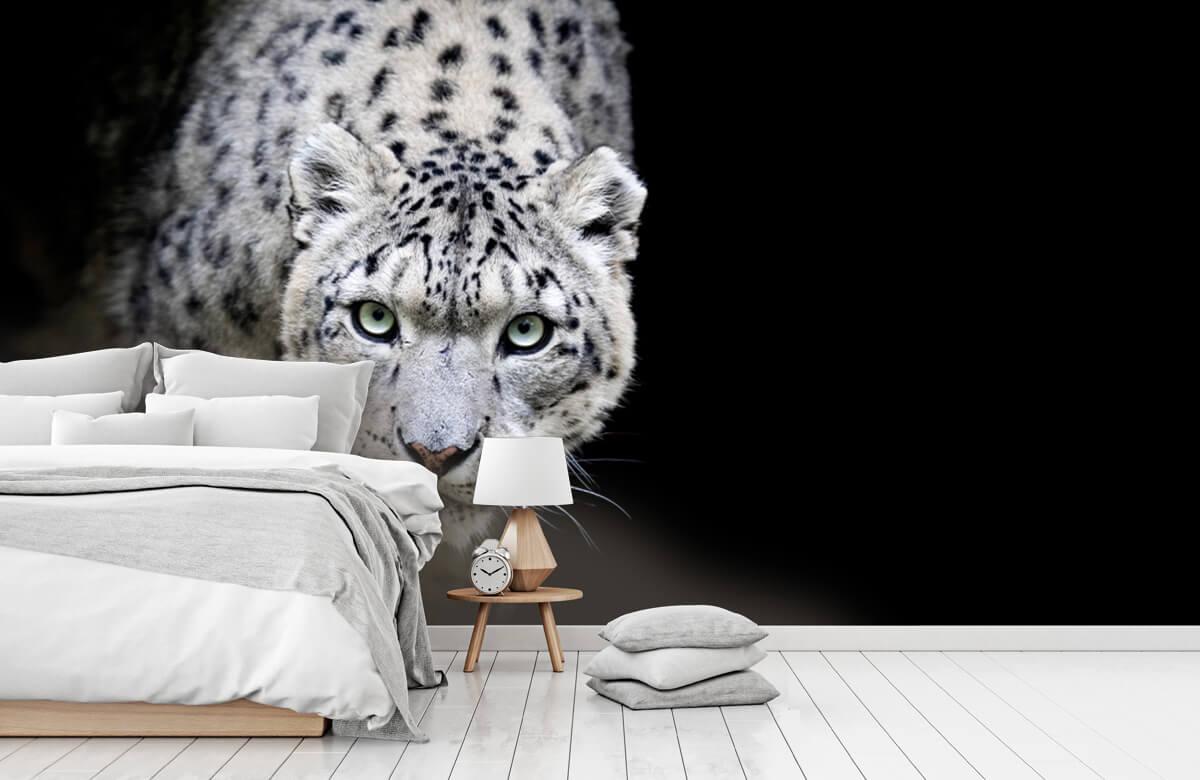 luipaarden Sneeuwluipaard 7