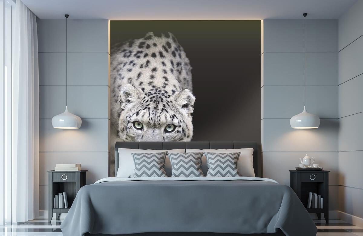 luipaarden Sneeuwluipaard 8