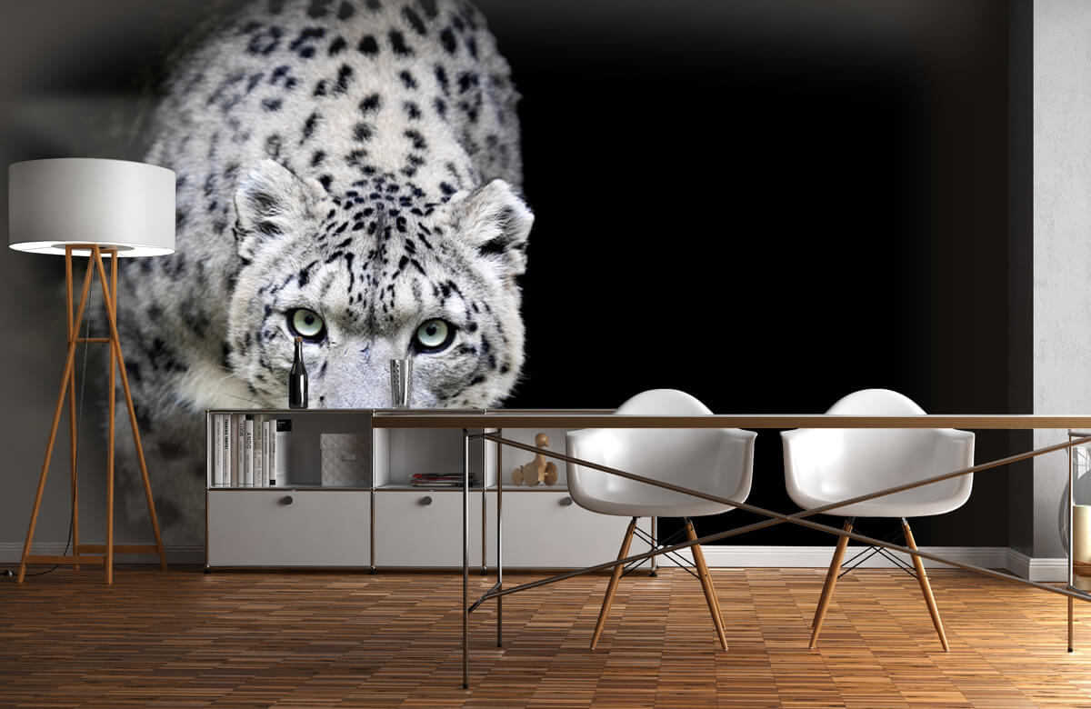 luipaarden Sneeuwluipaard 11