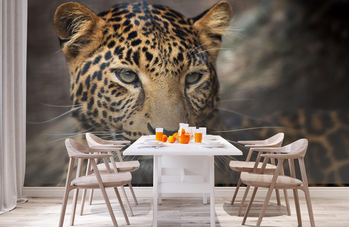 luipaarden Close-up van een luipaard 1