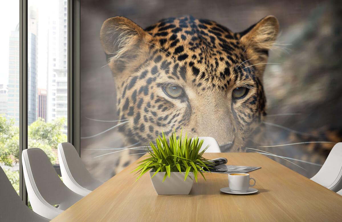 luipaarden Close-up van een luipaard 2
